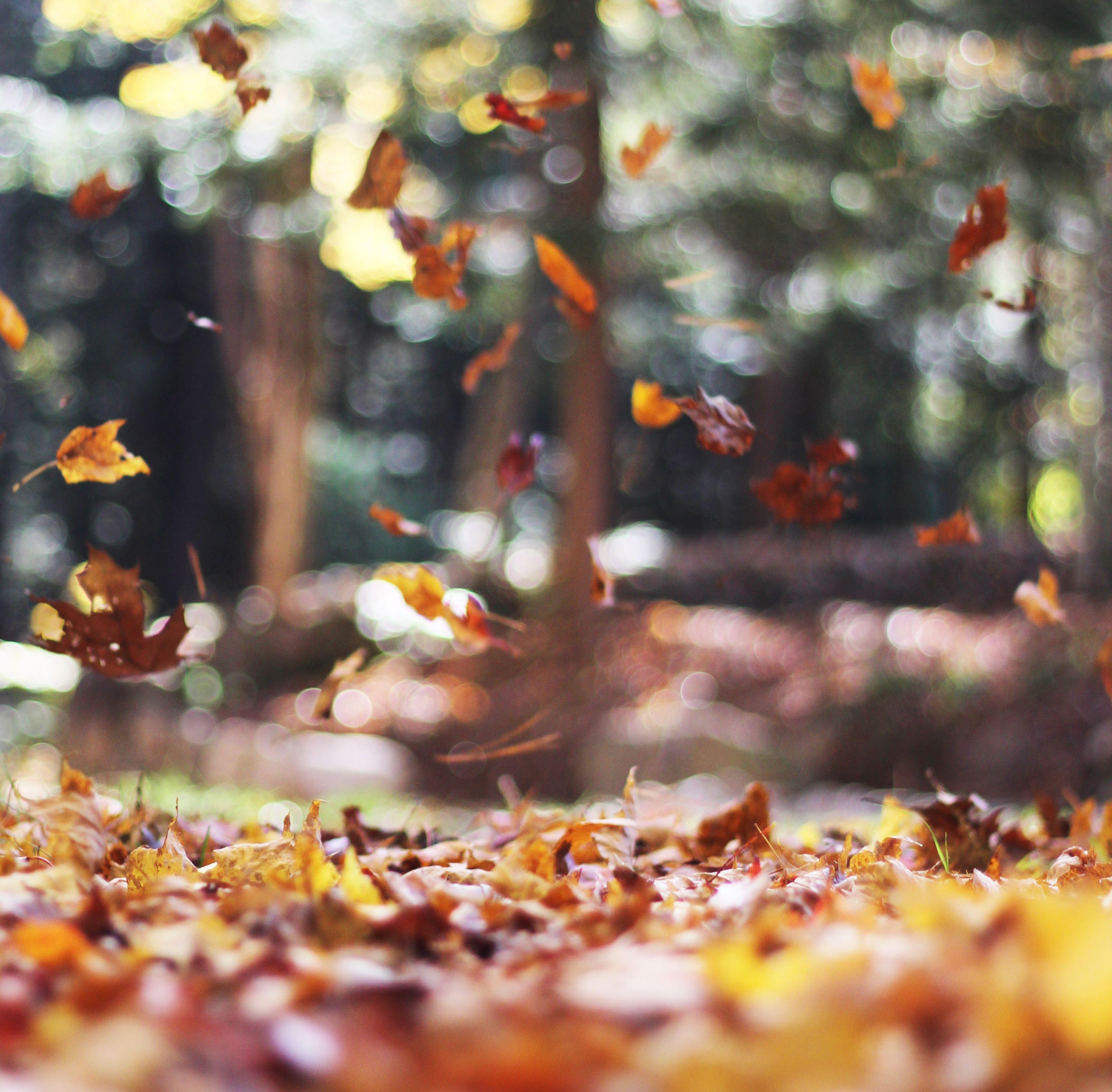 Ayurveda, automne